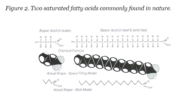 fatty acids2